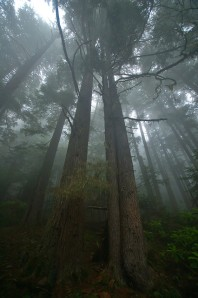 Rainforest of the Pacific Northwest